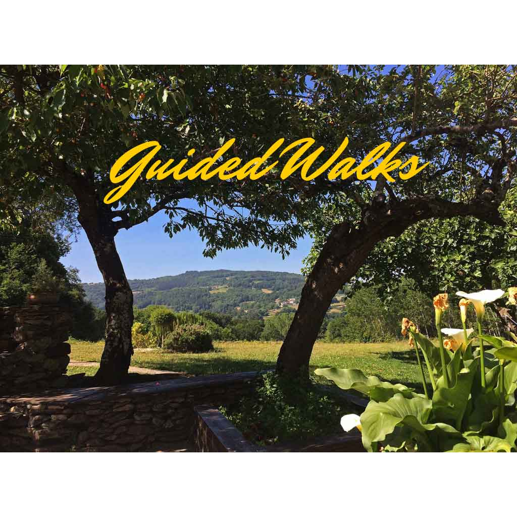 Guided Walks & Workshops